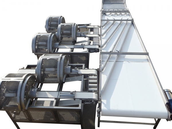 VWM Distribution Conveyor Feeds Peach Slicers